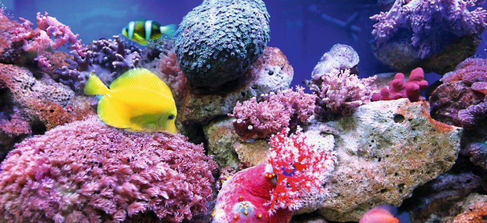 Кораллы Эль Гуна