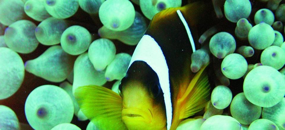 Подводный мир Эль Гуна