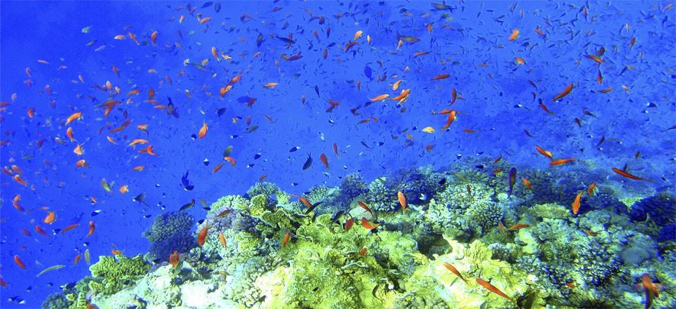 Марса Алам подводный мир